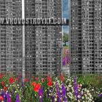 цветы многоэтажки